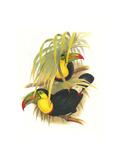 Rainbow or Keel Billed Toucan Art par John Gould