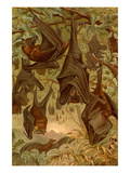 Hanging Bats Prints by F.W. Kuhnert