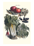 Vegetables; Green Beans, Purple Sweet Potato, and Tomato Print by Philippe-Victoire Leveque de Vilmorin