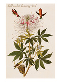 Ruff-Necked Humming-Bird Poster by John James Audubon