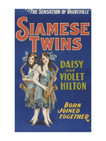 Siamese Twins Posters