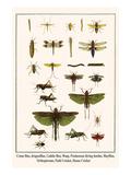 Crane Flies, Dragonflies, Caddis Flies, Wasp, Predaceous Diving Beetles, Mayflies, etc. Plakater av Albertus Seba
