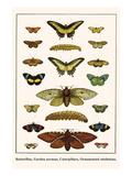 Butterflies, Garden Acraeas, Caterpillars, Ornamented Utetheisas, Posters by Albertus Seba