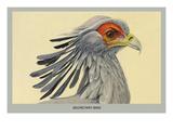 Secretary Bird Poster af Louis Agassiz Fuertes