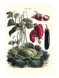 Vegetables; Eggplant, Cabbage, Peppers, Onions, and Beans. Prints by Philippe-Victoire Leveque de Vilmorin