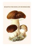 Boletus the King of Mushrooms Posters tekijänä Edmund Michael