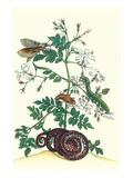Royal Jasmine with an Amazon Tree Boa and an Ello Sphinx Moth Taide tekijänä Maria Sibylla Merian