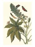 Castor Oil Tree with a Moth Juliste tekijänä Maria Sibylla Merian