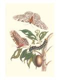 Limbo Tree with Owlet Moth Juliste tekijänä Maria Sibylla Merian