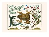 Toad, Lizard, Serpentes, Leopard Frog, Capers Print by Albertus Seba