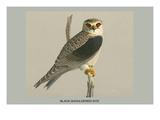 Black Shouldered Kite Affiches par Louis Agassiz Fuertes