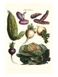 Vegetables; Melon, Onion, Cabbage, Potato, Raddish Julisteet tekijänä Philippe-Victoire Leveque de Vilmorin