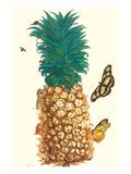 Butterfly and Beetle on a Pineapple Premium-giclée-vedos tekijänä Maria Sibylla Merian