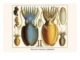 Ten Arm or Tentacle Cephlopods Kunst af Albertus Seba