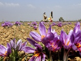 India Kashmir Daily Life Photographic Print by Mukhtar Khan