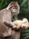 APTOPIX Bronx Zoo Fotografisk tryk af Mary Schwalm