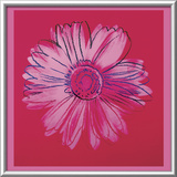 Daisy, c.1982  (crimson and pink) Pôsters por Andy Warhol