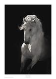 Halo de lumière Affiches par Robert Dawson