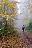 Forest cycling Fotografie-Druck von Charles Bowman