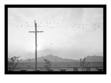 Birds on Wire Posters por Ansel Adams