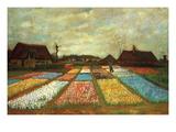 Flower Beds of Holland Poster von Vincent van Gogh