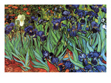 Iris Affiches par Vincent van Gogh