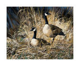 Lifetime Mate- Geese Prints by Andrew Kiss