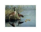 Geese In Spring Posters af Don Li-Leger