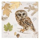 Northern Owl Kunstdrucke von Chad Barrett