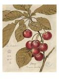 Cherry Etching Kunstdrucke von Chad Barrett