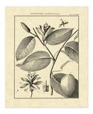 Vintage Botanical Study III Impressão giclée por Charles Francois Sellier
