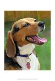 Beagle-Beagle Prints by Robert Mcclintock