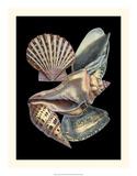 Treasures of the Sea II Impressão giclée por Pierre-Joseph Redouté