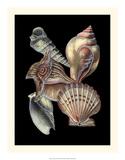 Treasures of the Sea I Impressão giclée por Pierre-Joseph Redouté