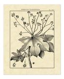 Vintage Botanical Study I Giclee Print by Charles Francois Sellier