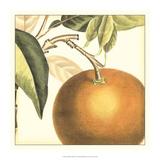 Graphic Orange Giclee Print