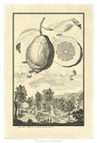 Crackled Genova Lemon Poster von Johann Christof Volckamer