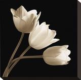Three Tulips Opspændt lærredstryk af Michael Harrison