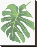 Philodendron I Stretched Canvas Print by Jenny Kraft