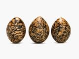 Northern Jacana Eggs, Jacana Spinosa, Western Foundation of Vertebrate Zoology, Los Angeles, CA Fotografie-Druck von Frans Lanting