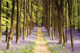 Trilha em bosque Fotografia