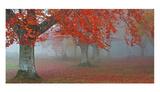 Árboles Rojos Arte por Juan Antonio Palacios