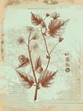 Botanical II Art by Ken Hurd