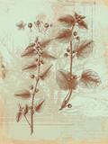 Botanical III Posters by Ken Hurd