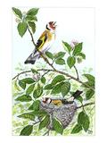 Goldfinch Reproduction procédé giclée par Friedhelm Weick