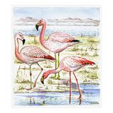 Flamingos I Reproduction procédé giclée par Friedhelm Weick