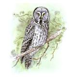 Great Grey Owl Reproduction procédé giclée par Friedhelm Weick