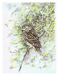 Little Owl II Reproduction procédé giclée par Friedhelm Weick