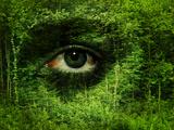 Soul of the Forest Fotografie-Druck von  Exploding Art