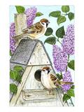 Tree Sparrows Reproduction procédé giclée par Friedhelm Weick